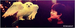 Hedwig and Harry. by vongolaCrest