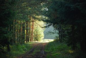 Forest Road by elanordh-stock