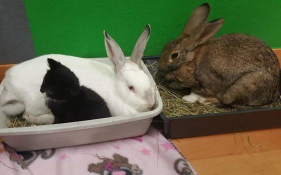 Thumper, Sooty and Charlie by essencestudios