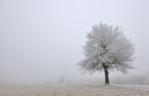 Tree in the mist by draganea