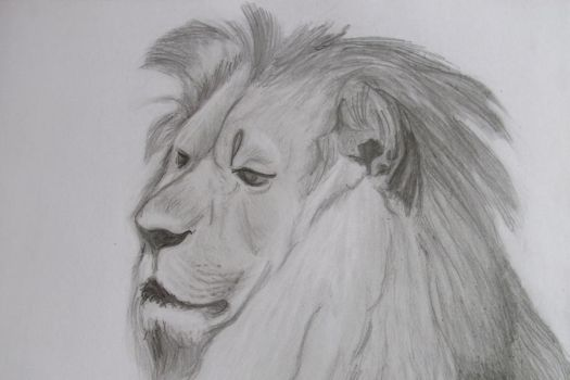 Lion drawing by richardnorth