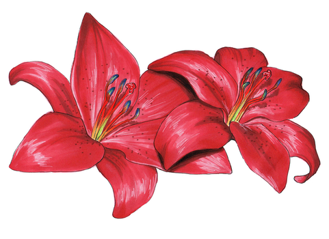 Red Lilies by Olsikowa