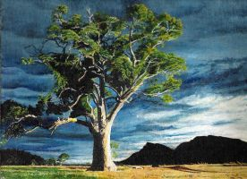 Cazneaux tree Flinders Ranges by Dontheunsane