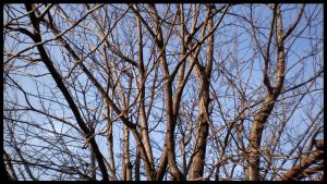 branches by FTN1