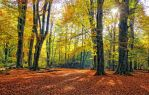 Autumn Jungle forest b by AStoKo