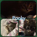 Little Pooky by Duchess-of-Dismal