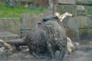 Otterly Captivated by Yunners