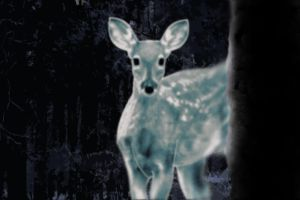The White Doe: HP by toscata