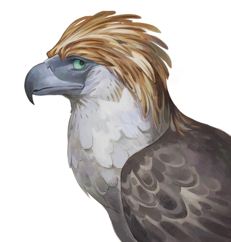 Philippine eagle by Drkav
