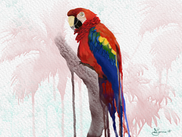 Parrot by Sillybilly60