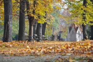 Autumn in the city by tomsumartin