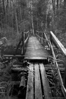 A Bridge To The Deepest Part Of The Forest by Vitskog