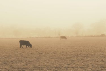 The fog......*mysterious* by Pidon-animal
