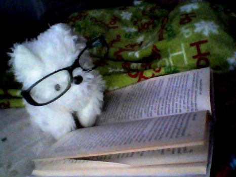 Scampers Likes to Read by kikilubanner