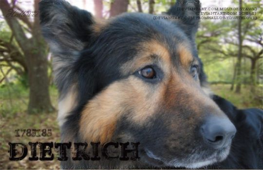 Dietrich by FromHallowedWithLove