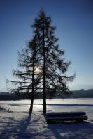 sunny winter by ValiCaptures