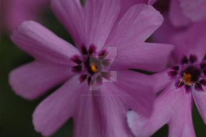 5 Petalled Purple Flower by MindfullyArtistic