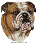 Bulldog Comm Portrait by Asteltainn