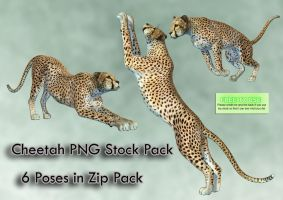 Cheetah PNG Stock Pack by Roy3D