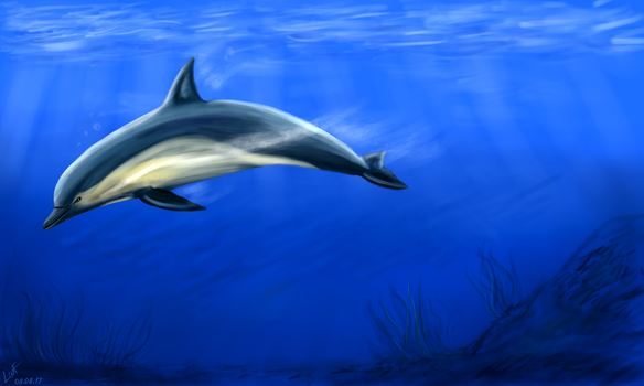 Dolphin by TanyaLis