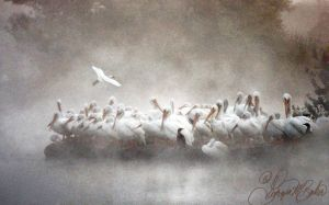 Pelicans in the mist by ForeverCreative