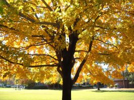 Yellow Tree by Lady-KL