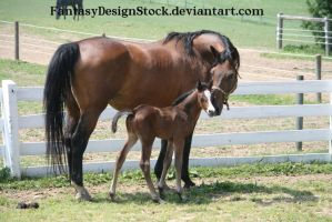 Momma And Foal 8 by FantasyDesignStock