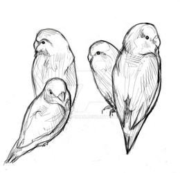 Bird sketches by Fomle-chan