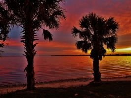 Indian River Palmetto Silhouettes by Matthew-Beziat