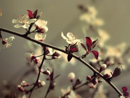 Flowering Cherry Tree by VBmonkey26