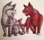Cats by swiftcross
