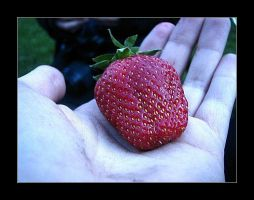 :: summer's first strawberry : by synergia