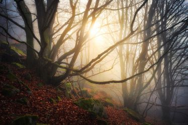 Mystic Embrace by FlorentCourty