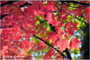 Autumn Colors III by CecilyAndreuArtwork