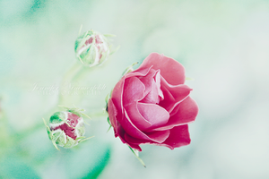 give me another good reason by JensPhotography
