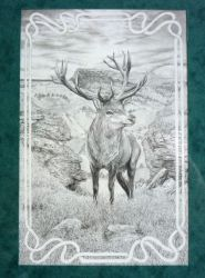 The Red Deer by squanpie