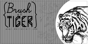 {Brush of Tiger} by Poqi
