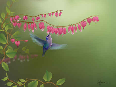 Bleeding Hearts by Sillybilly60