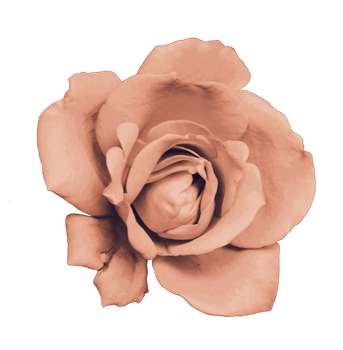 Rose PNG by sailorjessi
