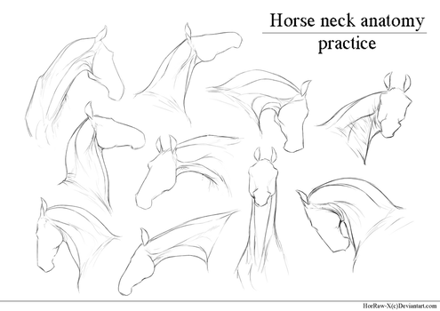 Horse Neck |anatomy practice| by HorRaw-X