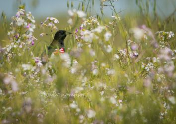 among the flowers by kayaksailor