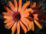 Color Splash Sunset Flower by solonaxdawn