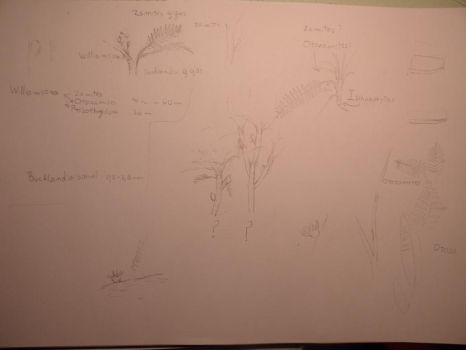 Bennettitalean plants ,sketches by Lucas-Attwell