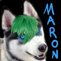 Maron The Husky Icon by Scubacat17