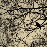 In the silhouette by 1Mathew7