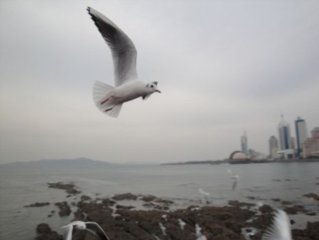 Seagulls Midflight 4 DSC01228 by Vermouth1991