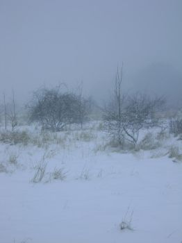 snowy fields -fog- 81 by dark-dragon-stock