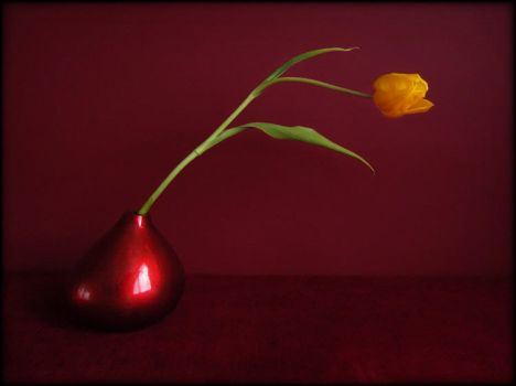 Une tulipe 2 by Renoux