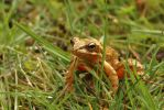 Frog 14-4-18 by pell21