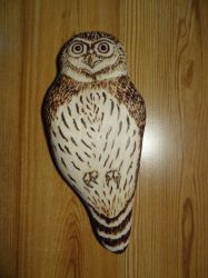 Another wooden pygmy owl by Bestiarius